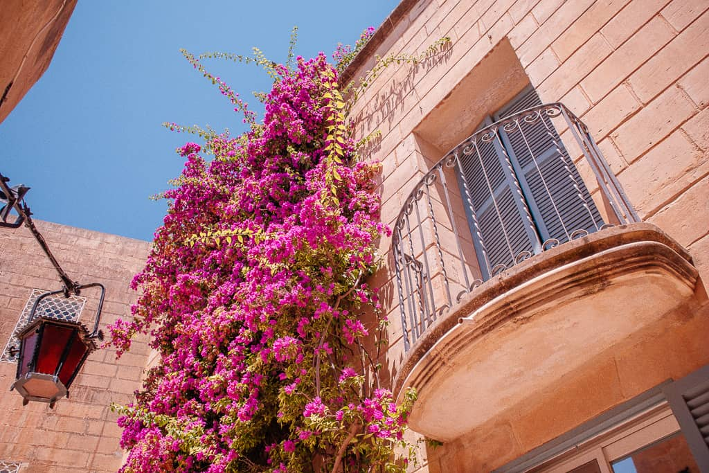 Malta island pictures - balcony with flowers in Mdina
