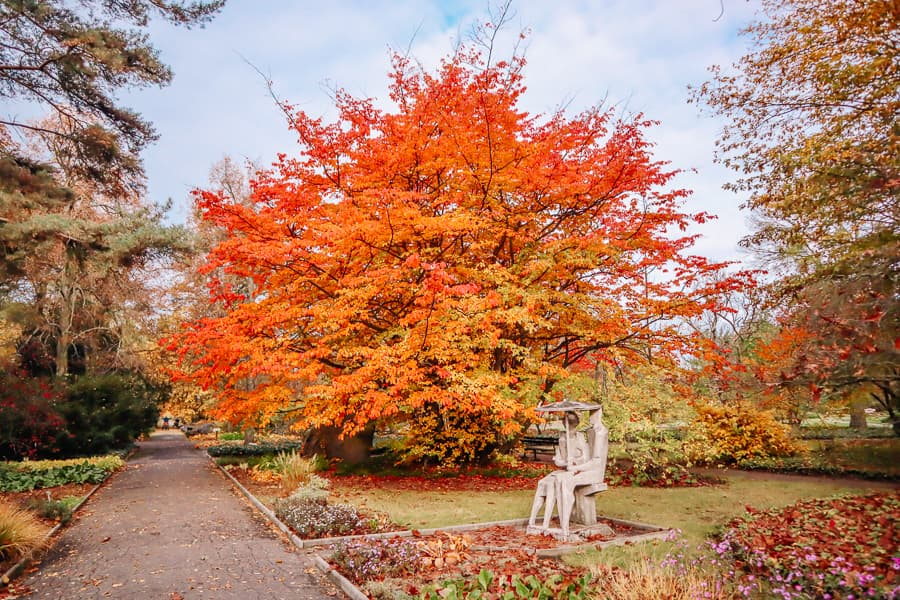 Best Things to do in Poznan - botanical gardens